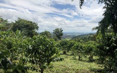 Coffee Price Crisis and the importance of origin diversity